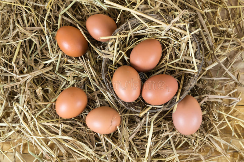 Fresh chicken eggs in the straw nest on wooden vintage background stock image
