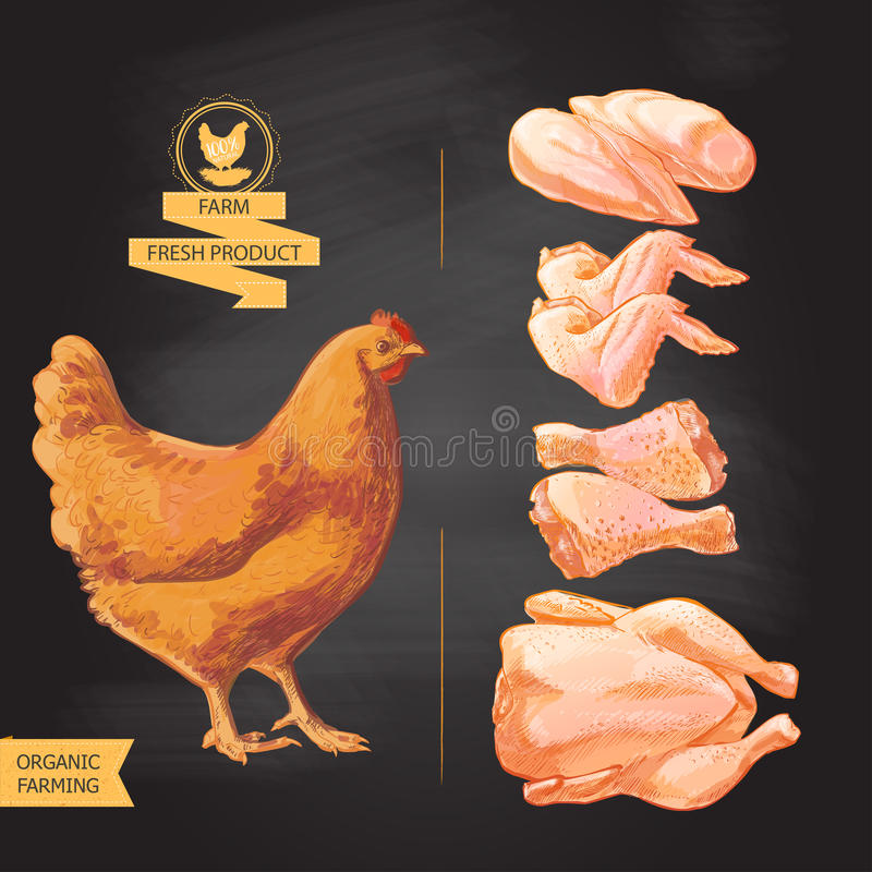 Fresh chicken meat. Top view. on a white vector vintage sketch hand drown vector illustration