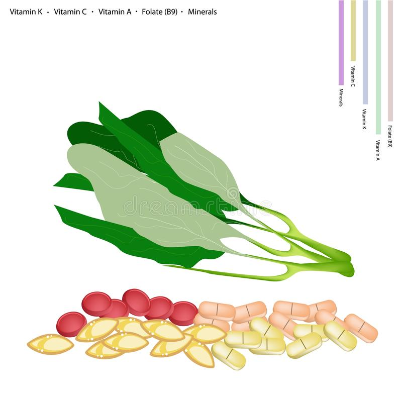 Fresh Chinese Broccoli with Vitamin K, C, A and B9 royalty free illustration