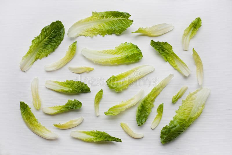 Fresh chinese cabbage isolated stock photography