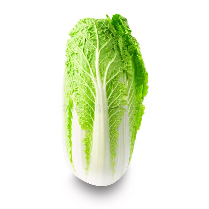 Fresh chinese napa cabbage isolated on white background royalty free stock photos