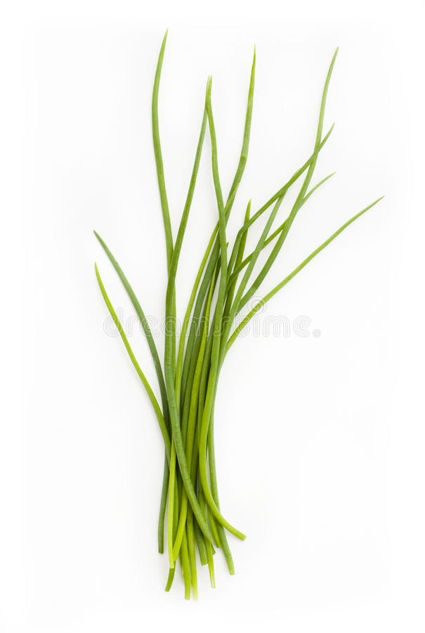 Fresh chives bunch royalty free stock image