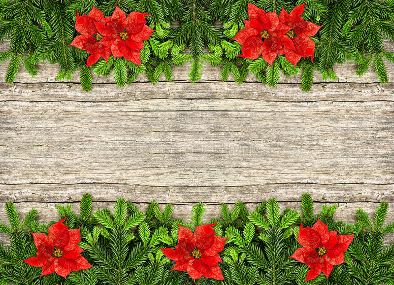 Fresh christmas tree branch and red poinsettia flowers stock images