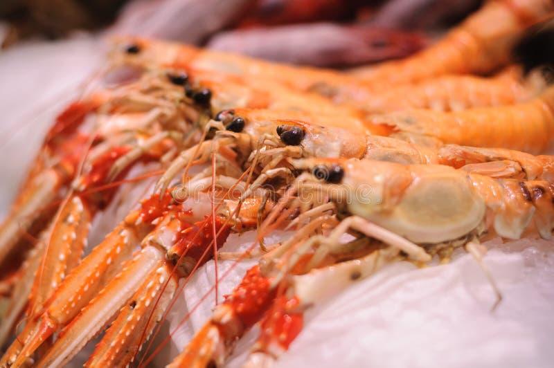 Fresh cigala on market royalty free stock image