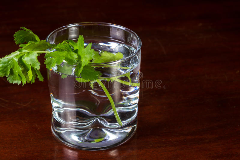 Fresh cilantro in a glass of water. Close up of some cilantro leaves in a glass of water served on a dark wooden table royalty free stock photography