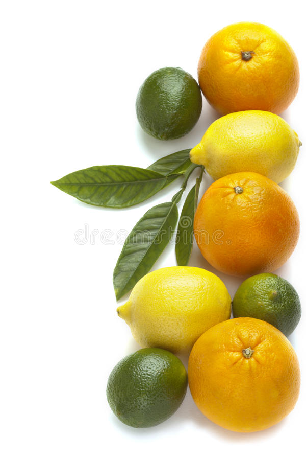 Fresh citrus fruit royalty free stock photos
