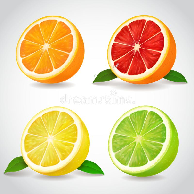 Free Fresh Citrus Fruit Halves. Orange Grapefruit Lemon Lime Vector Realistic Icons Royalty Free Stock Image - 103057866