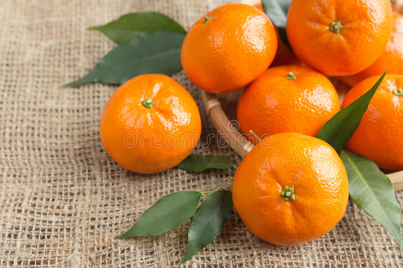Fresh citrus fruits tangerines, oranges closeup in rustic style royalty free stock photos