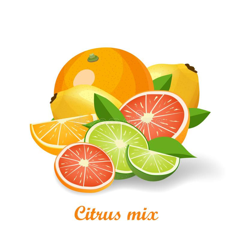 Fresh citrus fruits vector illustration isolated on white background. Whole and halves icons with grapefruit, lemon, orange and lime vector illustration
