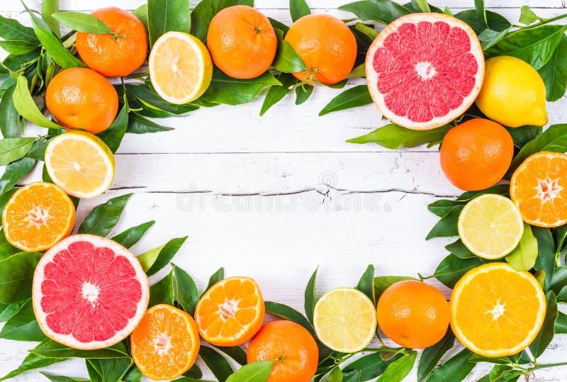 Fresh citrus fruits. stock images