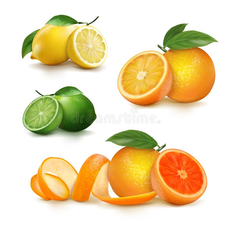 Fresh citrus fruits whole and halves. Vector illustration royalty free stock photos