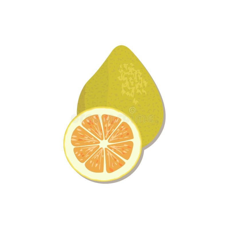 Fresh Citrus . orange, lemon, lime, bergamot, tangerine and grapefruit with leaves and slices. Citrus products - orange, lemon, lime, bergamot, tangerine stock illustration