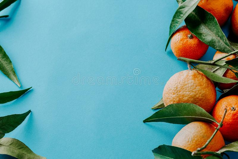 Fresh clementines with green leaves and with copy space stock photo