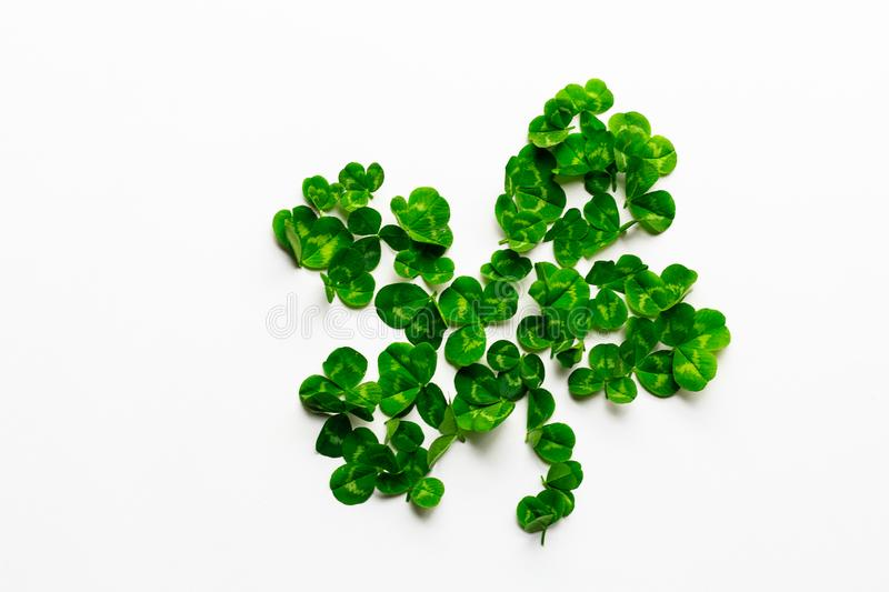 Fresh clover leaves lying on white background. Flat lay. Top view. royalty free stock images