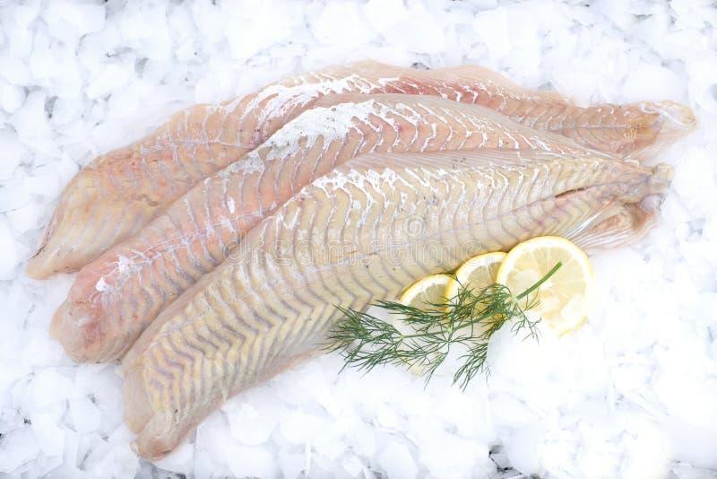 Fresh coalfish. With lemons and dill royalty free stock image