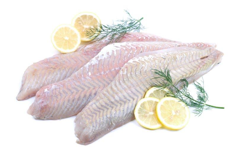 Fresh coalfish. With lemons and dill stock images