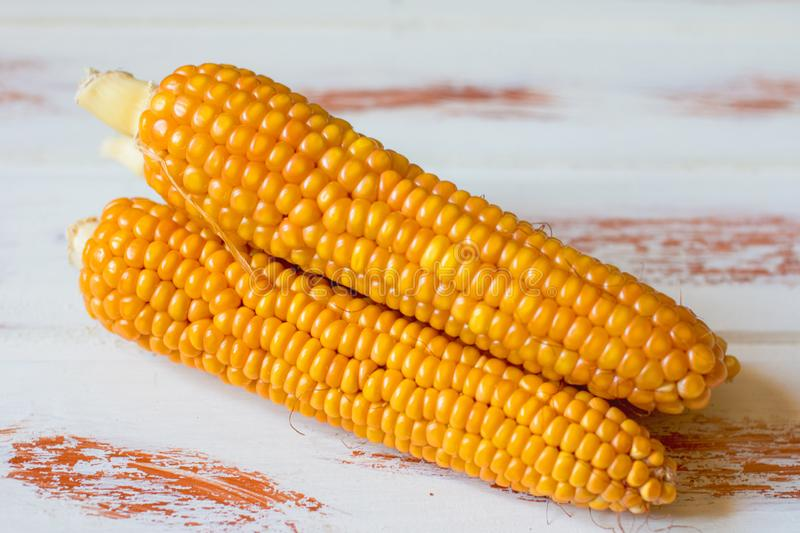 Fresh cob of delicious corn. Autumn corn harvest royalty free stock images