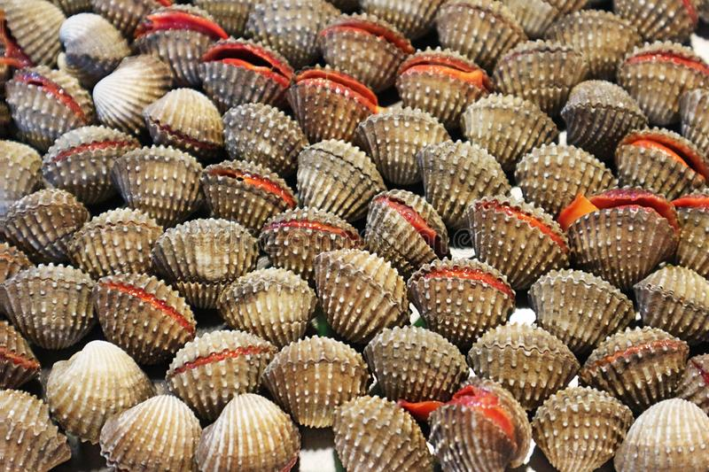 Fresh Cockles at the Market royalty free stock photo