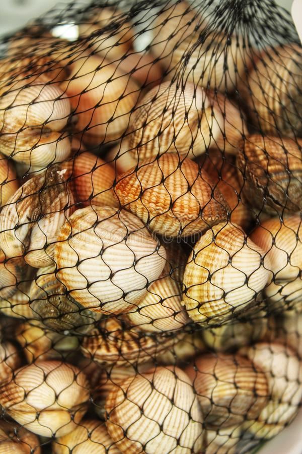 Fresh cockles mesh in a market stall. In Lisbon, Portugal royalty free stock photos