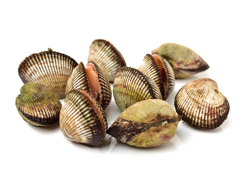 Fresh cockles seafood stock images