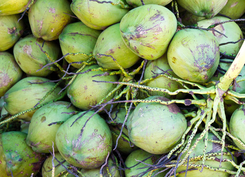 Download Fresh coconut stock image. Image of nutrition, drink - 26619979