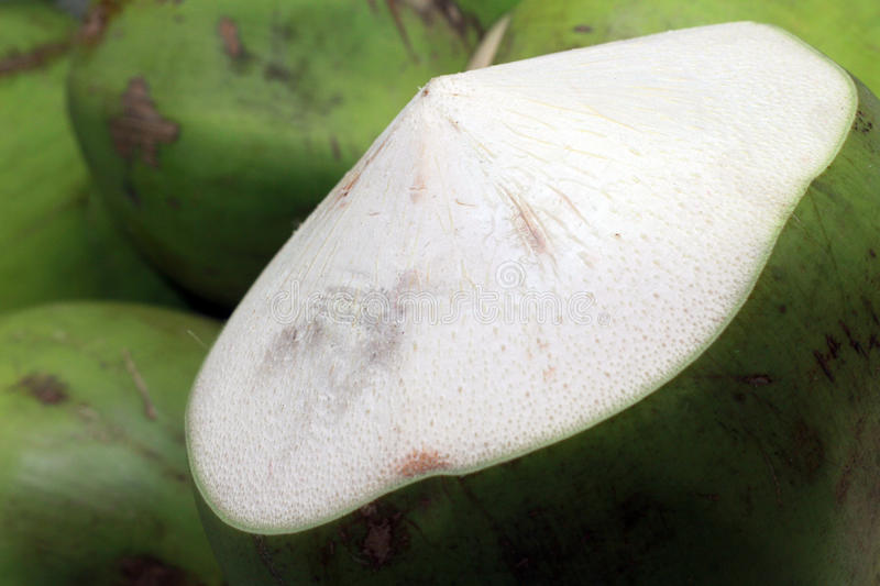 Download Fresh coconut from a tree stock image. Image of photo - 21427965