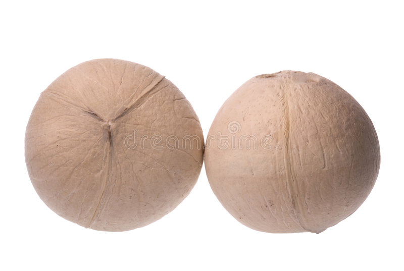 Download Fresh Coconuts Isolated stock photo. Image of coconuts - 6888592