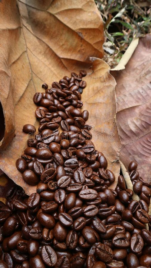 Fresh coffee bean texture, nature, still life stock photo