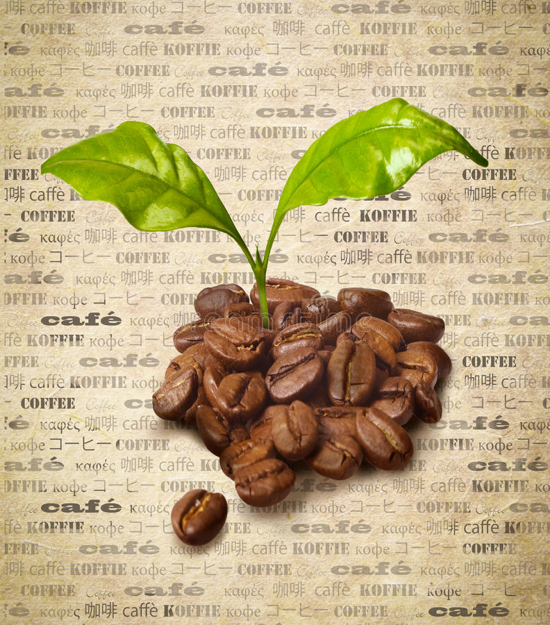 Download Fresh Coffee Beans Royalty Free Stock Image - Image: 23491656