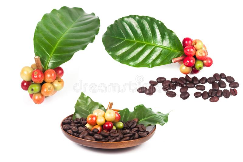 Fresh coffee beans on dry coffee beans in dish. Fresh coffee beans on dry coffee beans in wood dish royalty free stock photo