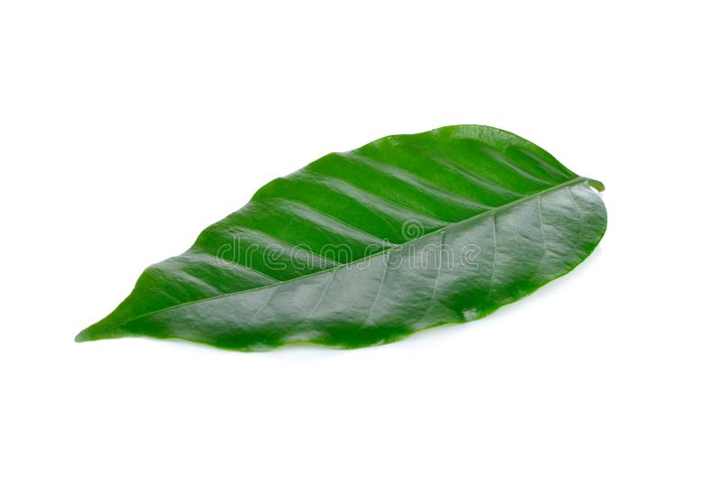 Fresh coffee beans leaf on white background stock images