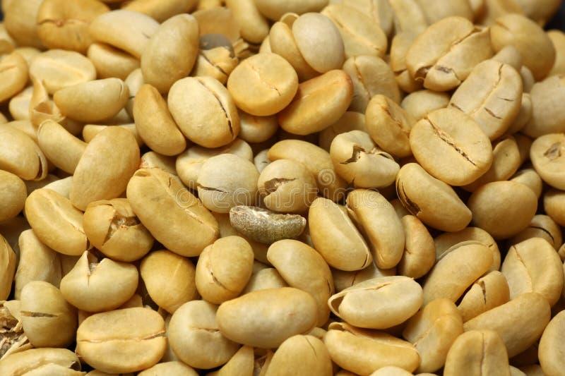 Fresh coffee beans not roast stock photos