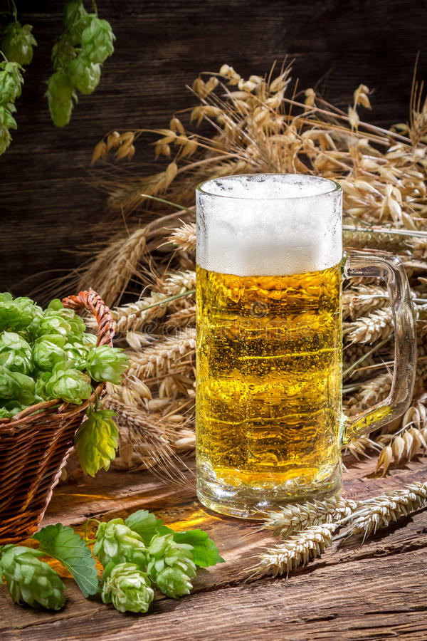 Fresh cold beer with a large foam stock images