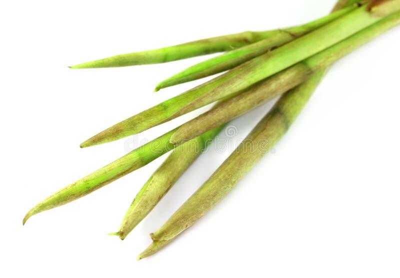 Fresh colocasia stem stock image