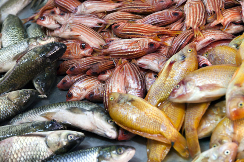 Download Fish for Sale stock image. Image of market, merchandise - 30037871