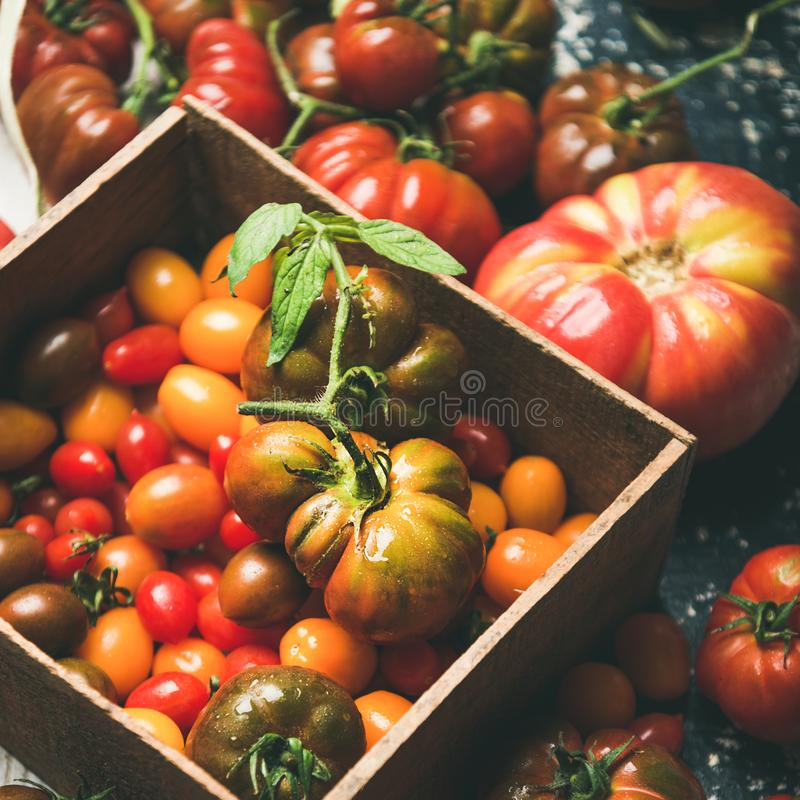 Fresh colorful heirloom, bunch and cherry tomatoes, square crop royalty free stock images
