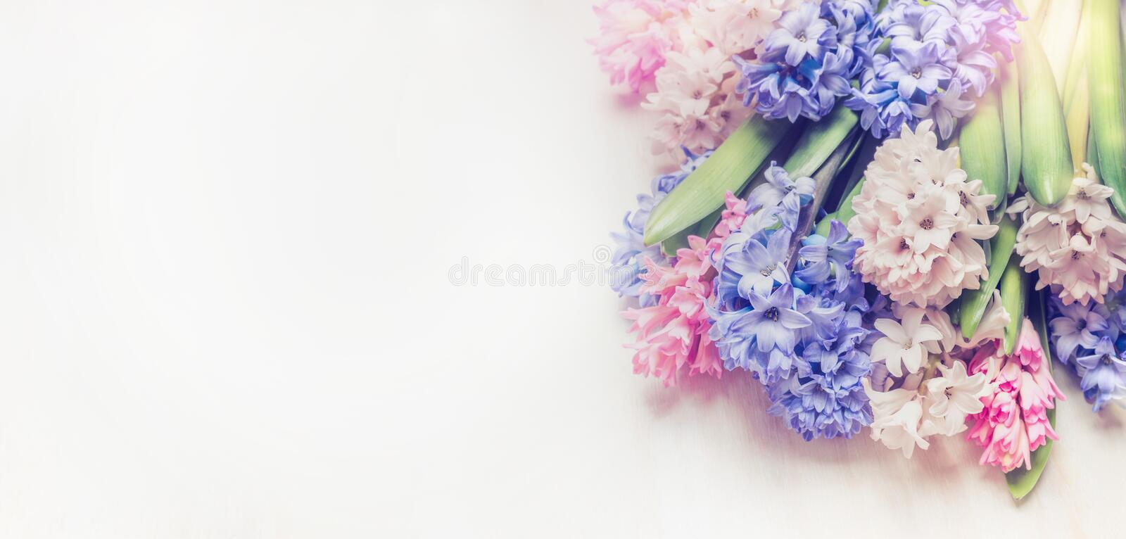 Fresh colorful Hyacinths bunch on light wooden background, floral border. royalty free stock photo