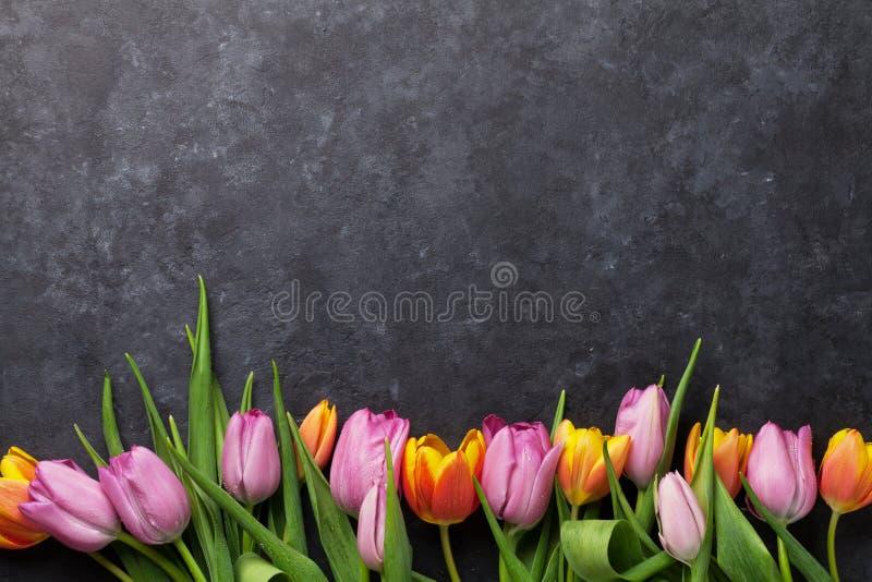 Fresh colorful tulip flowers stock image