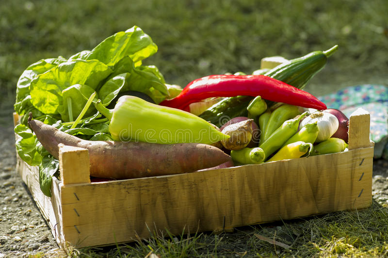Fresh and colorful vegetables in the box in the garden close up. Healthy lifestyle concept with home grown bio vegetables. In a wooden hutch stock photo