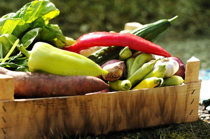 Fresh and colorful vegetables in the box in the garden close up. Healthy lifestyle concept with home grown bio vegetables. In a wooden hutch royalty free stock photography