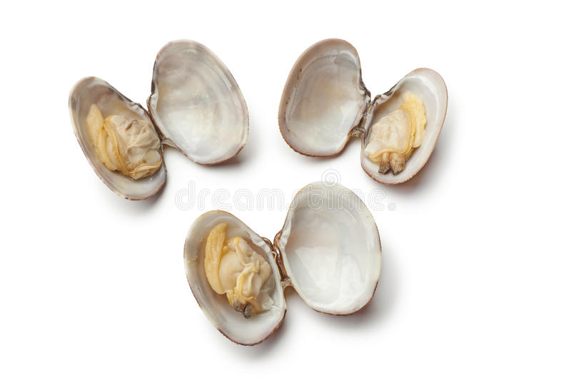 Fresh cooked clams
