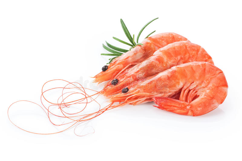 Fresh cooked shrimp isolated on white background. Seafood stock images
