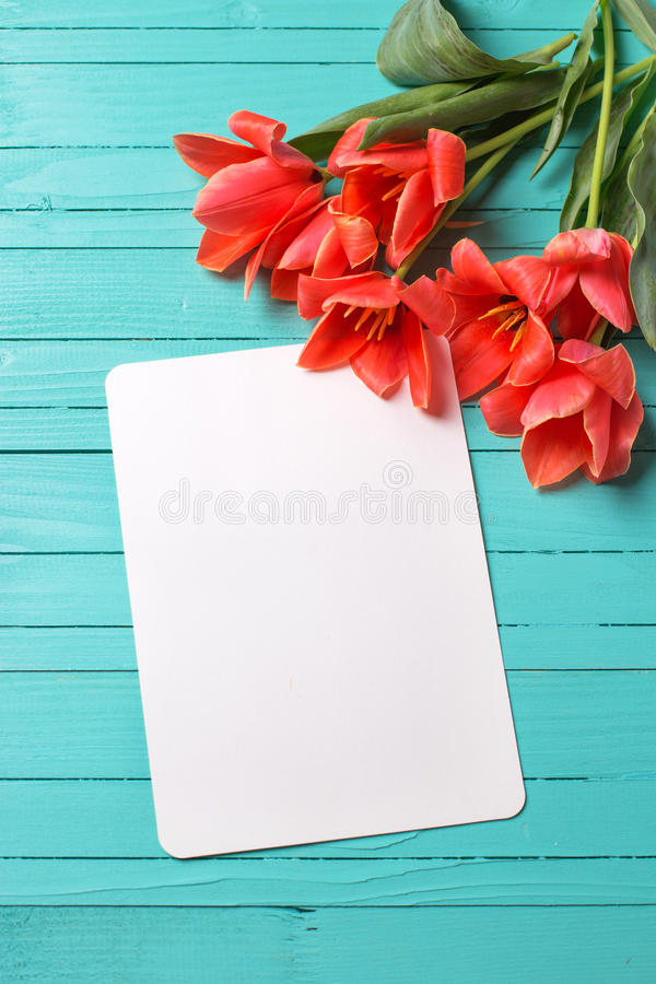 Fresh coral tulips and empty tag on teal painted wooden backg stock image