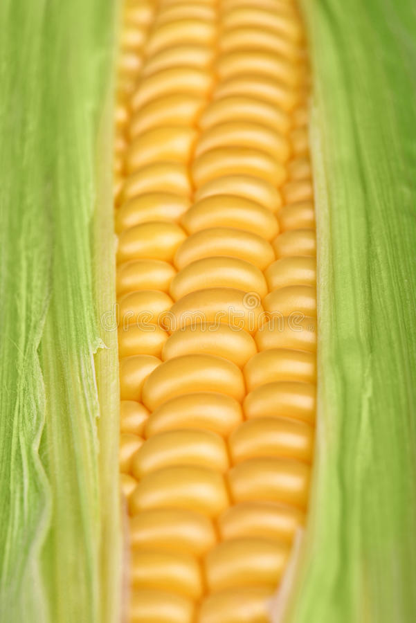 Fresh corn closeup stock photo