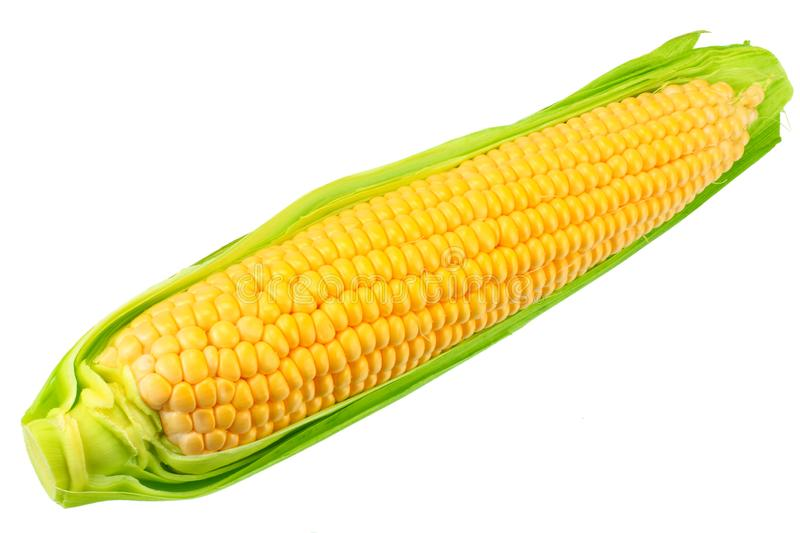 Fresh corn on cob isolated on white background royalty free stock photography