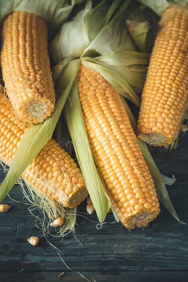 Fresh Corn on Cob royalty free stock image