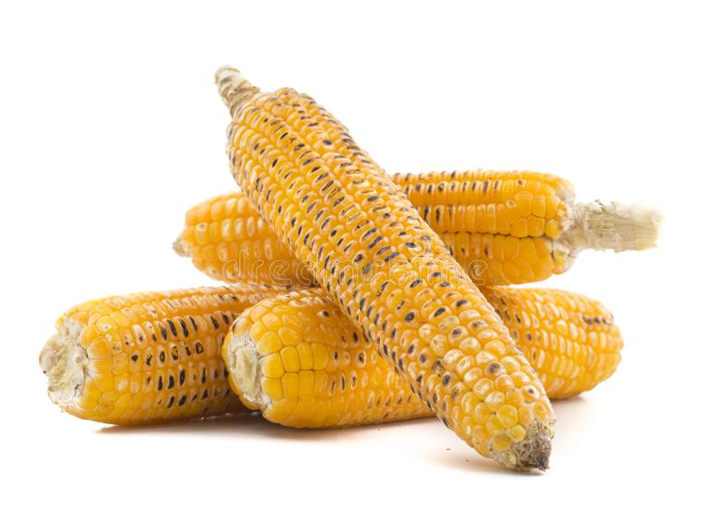 Sweet Corn. Fresh corn on cobs on wooden table, closeup, top view stock image