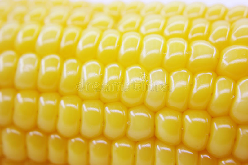 Download Fresh corn stock image. Image of healthy, background - 39506611