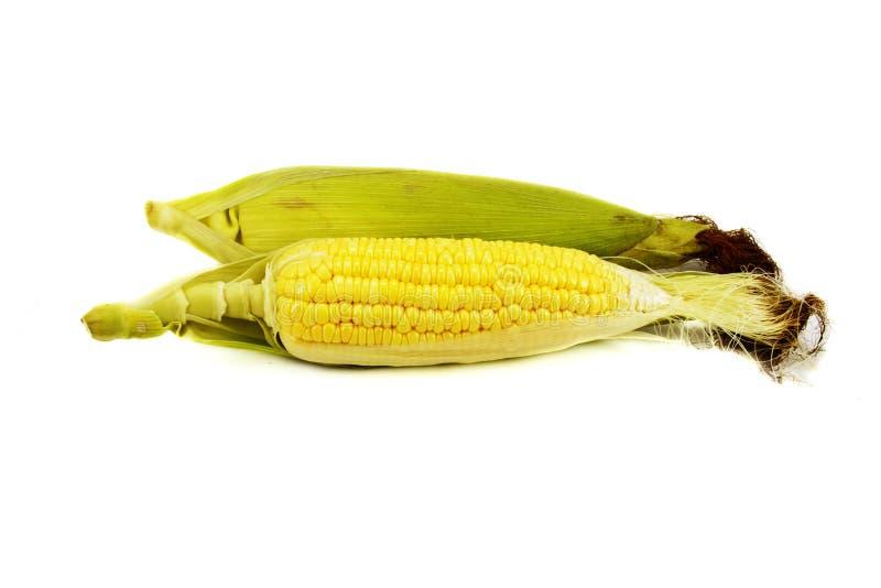 Fresh corn. Isolated on white background stock image