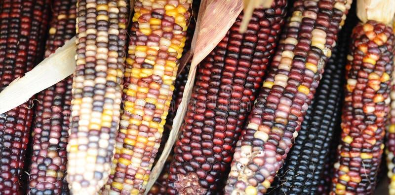 Fresh corn stock photography